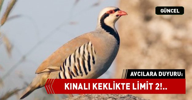 KINALI KEKLİKTE LİMİT 2